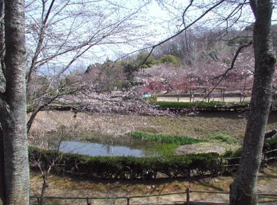 紀伊風土記の丘09-資料館の裏池