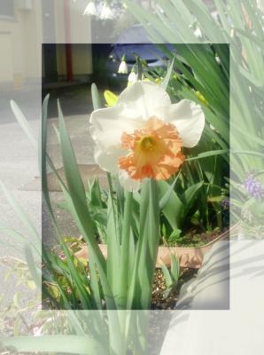 プランターの花2007.春01