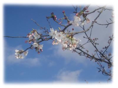 桜2007-06