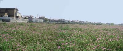 レンゲ畑2007-04