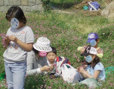 レンゲ畑2007-06