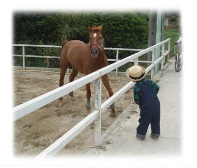 馬の牧場01