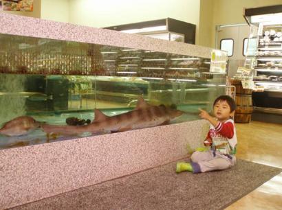 スーパーの鮫さんと