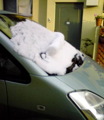 車に雪2008-1
