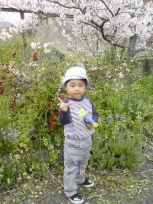 住宅の桜2008-01