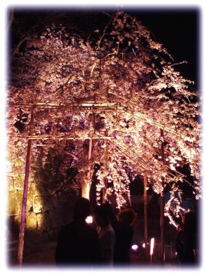 和歌山城の夜桜002