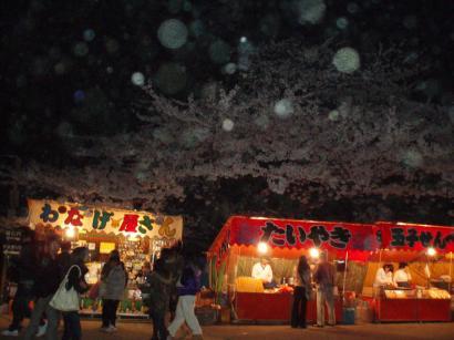 和歌山城の夜桜03