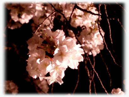 和歌山城の夜桜04