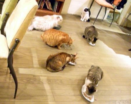 極簡 猫カフェ