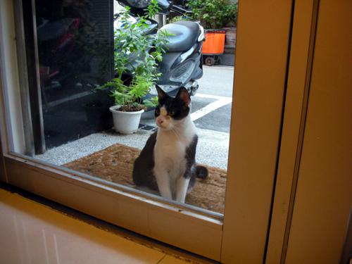 台湾の街猫