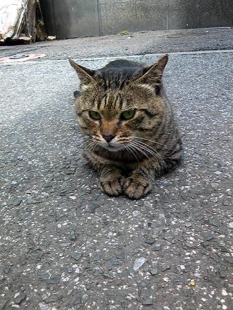 日本の街猫