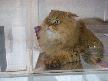 永康街の猫