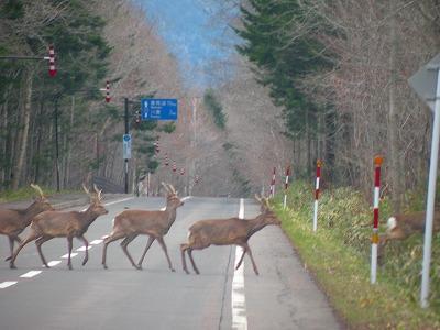 鹿が横断中