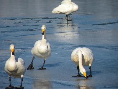 屈斜路湖凍りはじめる