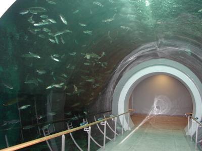 自治体セミナー 琵琶湖博物館(トンネル水槽)