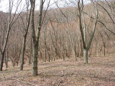 四季の森②