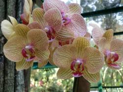 orchid8