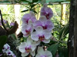 orchid9
