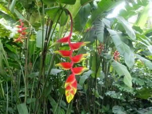 orchid framingo