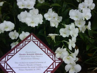 orchid princess masako