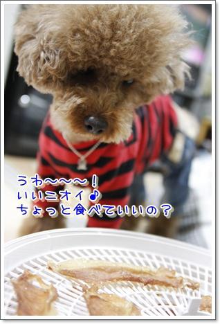 10_20100418225754.jpg