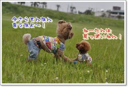 10_20100524012652.jpg
