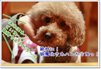 10_20110127223726.jpg