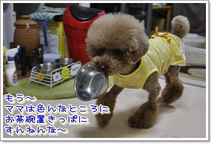 11_20100601005420.jpg