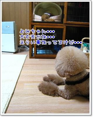 11_20100724235342.jpg