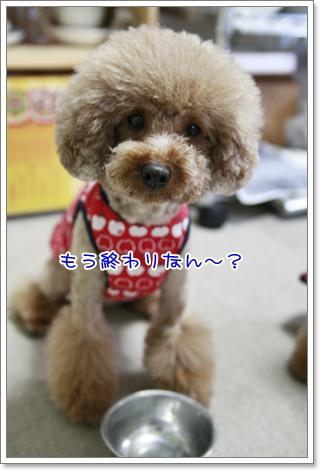 11_20110122140518.jpg