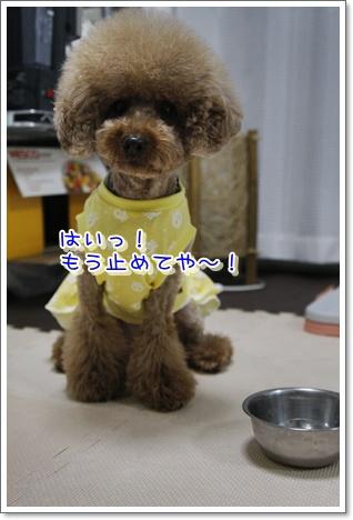 12_20100601005420.jpg