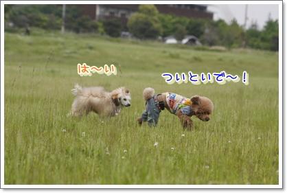 13_20100524013057.jpg