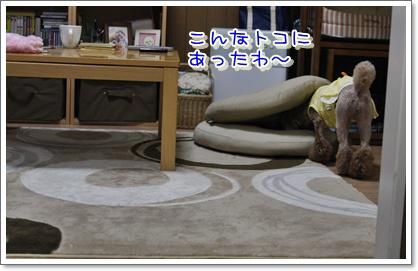 13_20100601005859.jpg