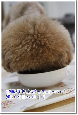 14_20100320001513.jpg