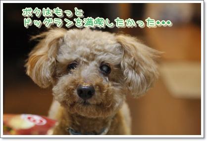 14_20100322230821.jpg
