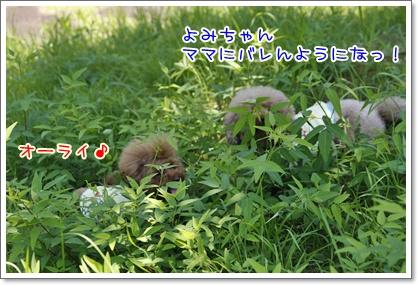 14_20100718223755.jpg