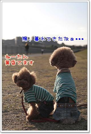 14_20110328225803.jpg