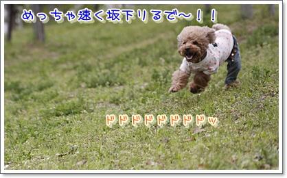 15_20100420192816.jpg
