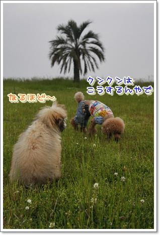 15_20100524013057.jpg