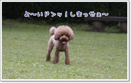 15_20100628004213.jpg