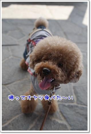 15_20100711173410.jpg