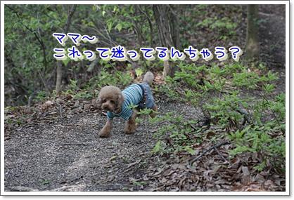16_20100502000541.jpg