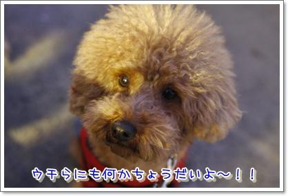 18_20100222233641.jpg