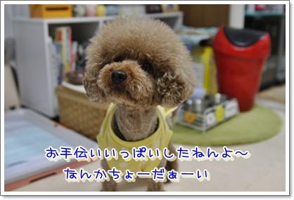 19_20100601010622.jpg
