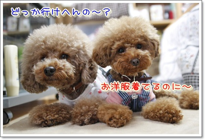 1_20100420191218.jpg
