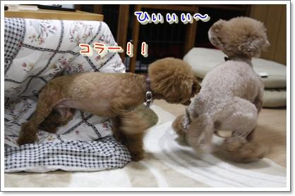 1_20100427011209.jpg