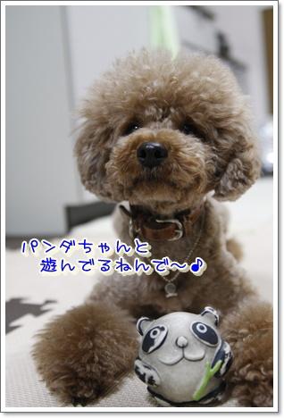 1_20100514230013.jpg