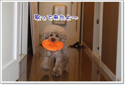 1_20100515225450.jpg