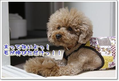 1_20100522001930.jpg