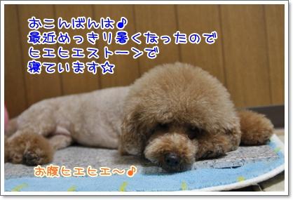 1_20100703004750.jpg